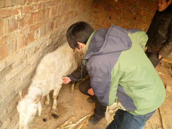 养羊与羊病防治培训