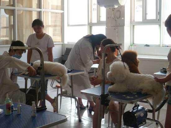 宠物美容与医师防治培训