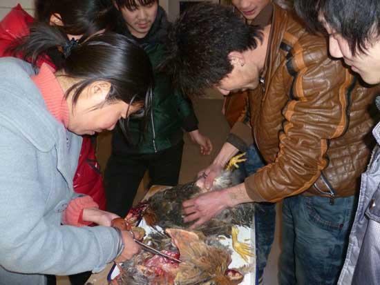郑州养鸡与鸡病防治培训