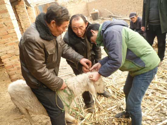 郑州养羊与羊病防治培训