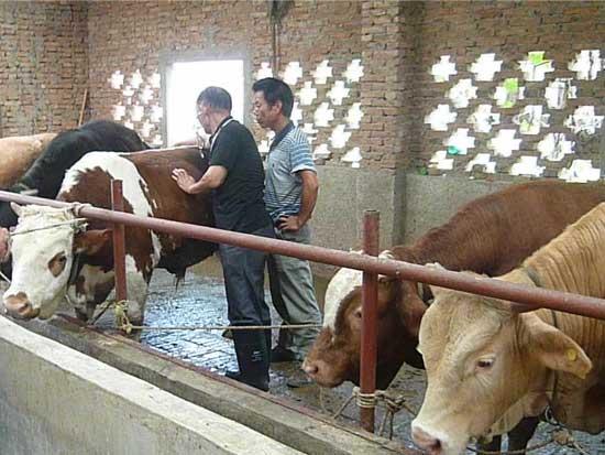 郑州养牛与牛病防治培训