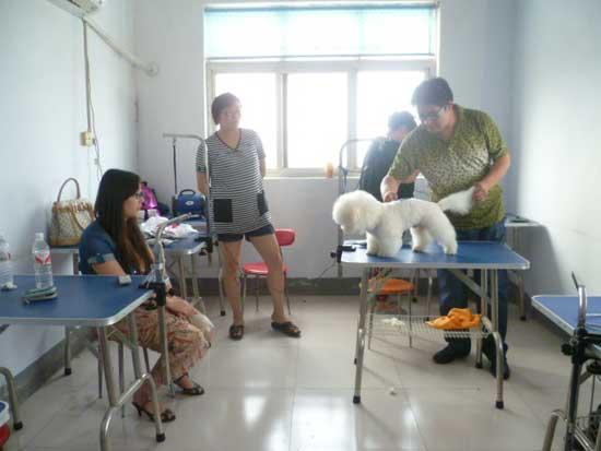 郑州宠物美容与医师培训