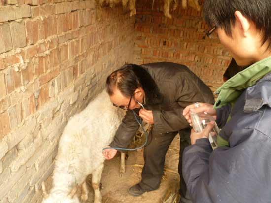 羊病防治培训