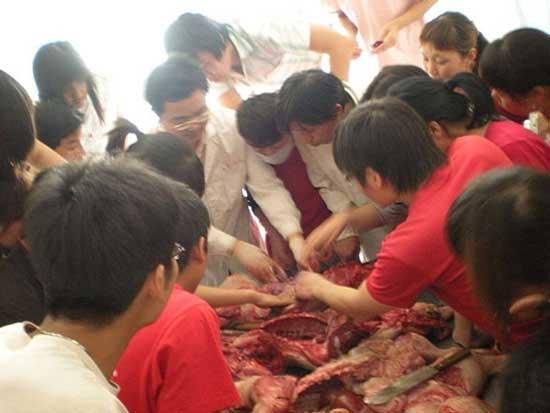猪病有效防治措施