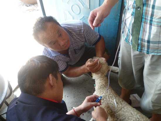 羊病防治技术