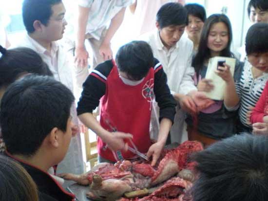 郑州宠物美容培训