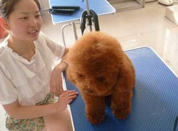 郑州宠物医师培训