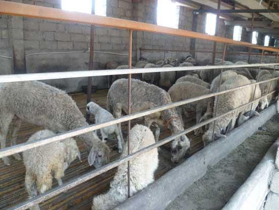 养羊培训(木)