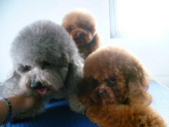 宠物医疗与美容