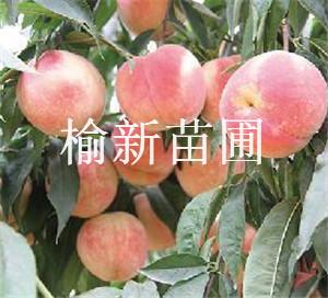 姘歌�茶��妗�4��