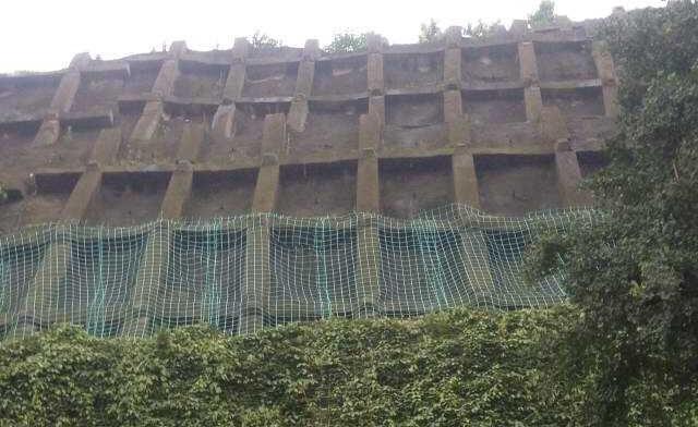 贵州爬藤网