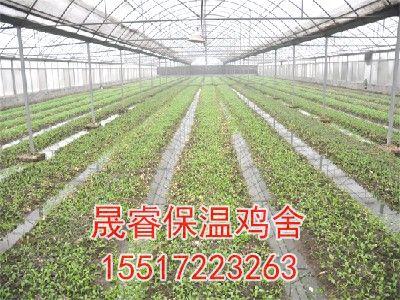有机蔬菜大棚种植