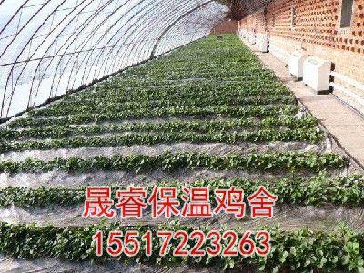 小型大棚种植
