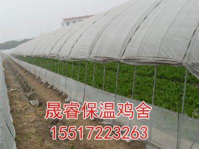 青菜大棚种植