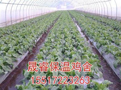 种植大棚造价
