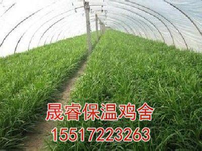 温室蔬菜大棚造价