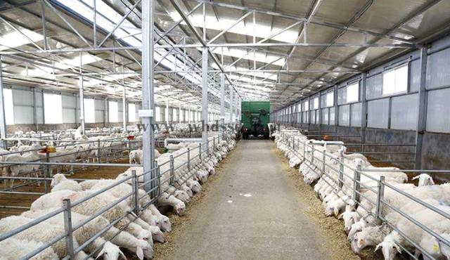 武漢圈養畜牧羊舍施工隊