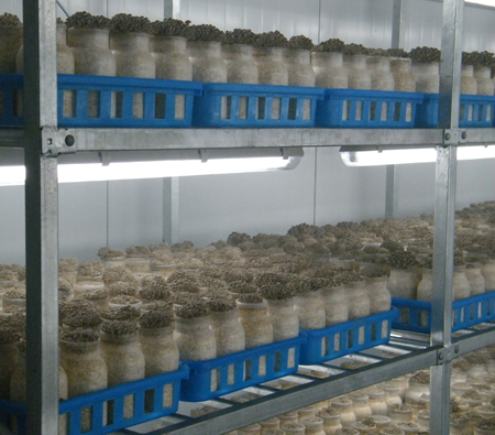 蟹味菇工厂