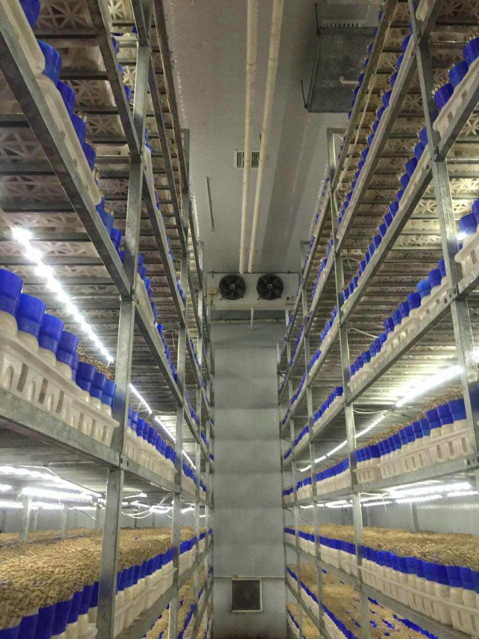 食用菌机械装备