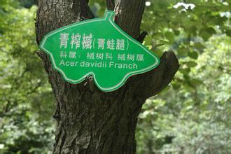 武汉树木标识