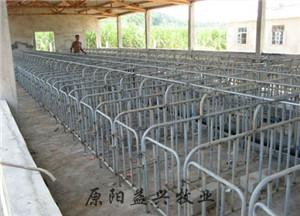 北京猪用联体限位栏