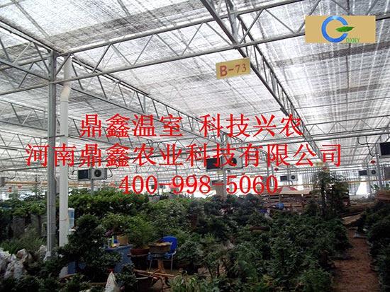 花卉市场专用大棚
