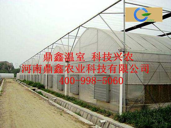 许昌薄膜温室大棚工程