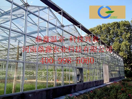 育苗专用温室大棚
