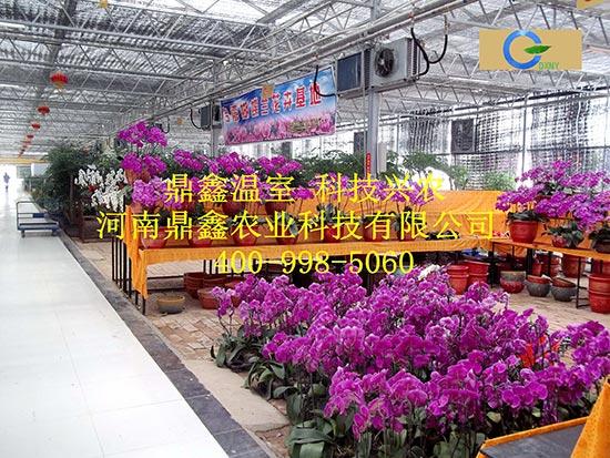 温室型花卉市场