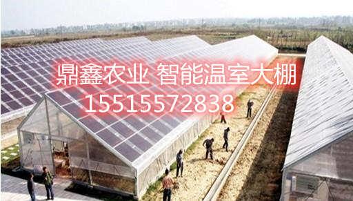 太阳能光伏板温室
