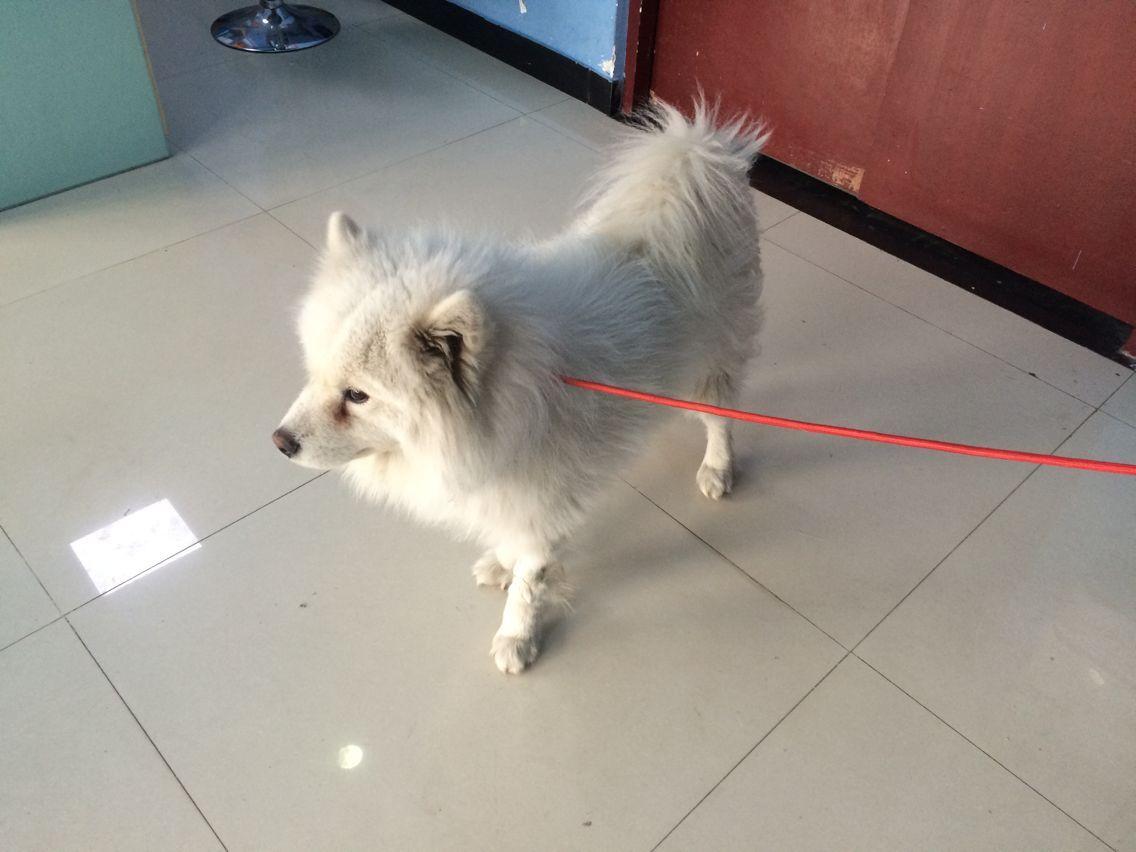 犬肾功能衰竭