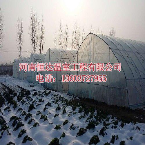 大棚蔬菜种植前景