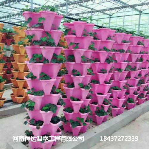 河南花卉大棚工程