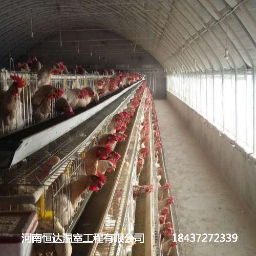 土鸡养殖大棚