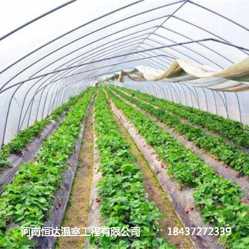 光伏温室蔬菜大棚