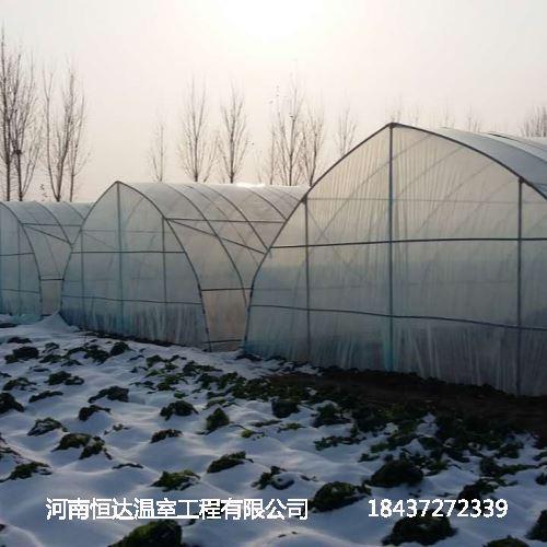 温室大棚种菜