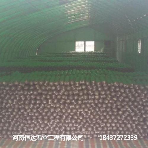 食用菌大棚