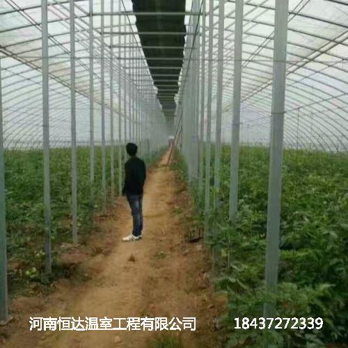 蔬菜钢架大棚造价