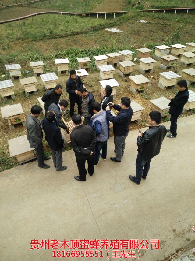 贵州中蜂养殖培训