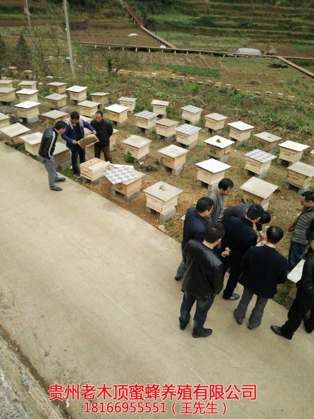 贵阳中蜂养殖培训