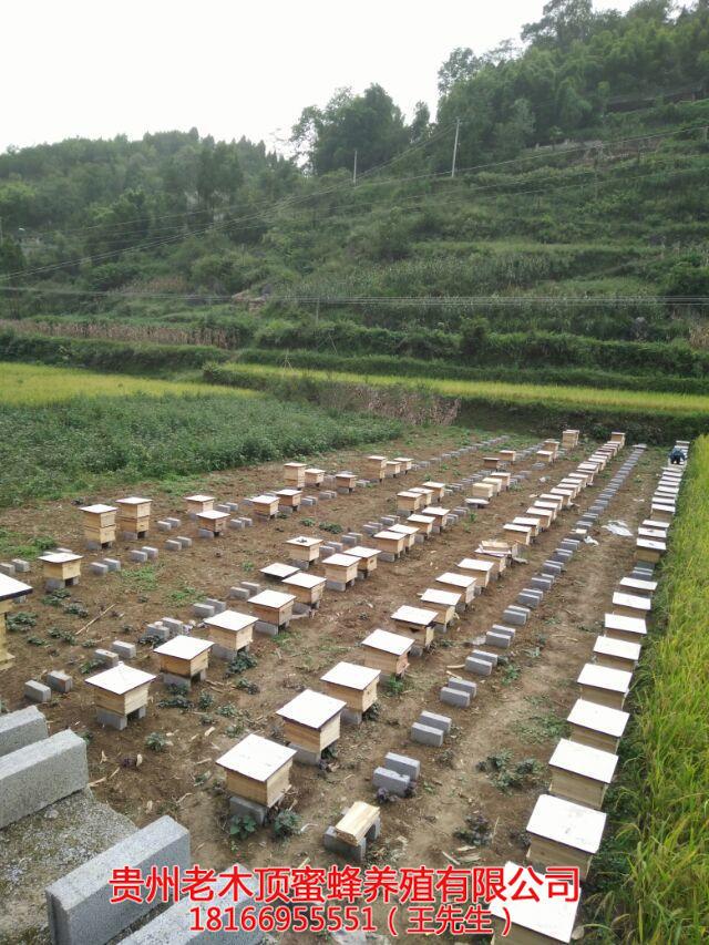 铜仁中蜂养殖培训