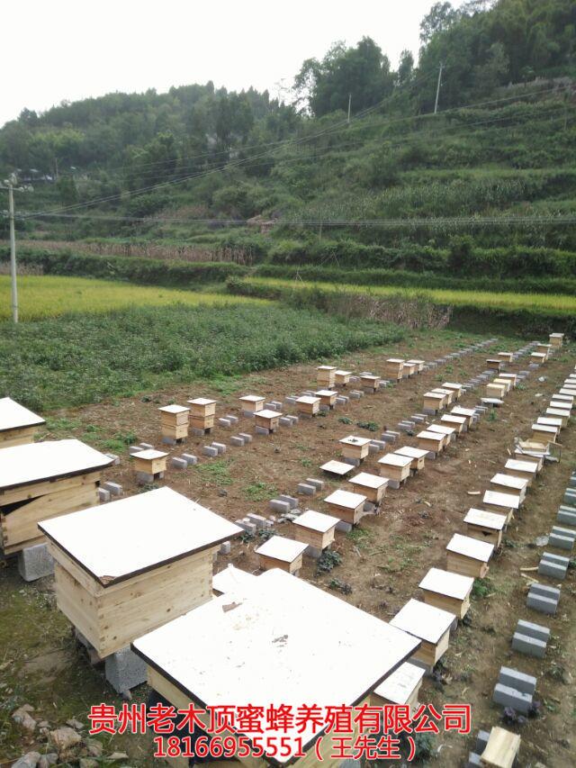 安顺中蜂养殖培训