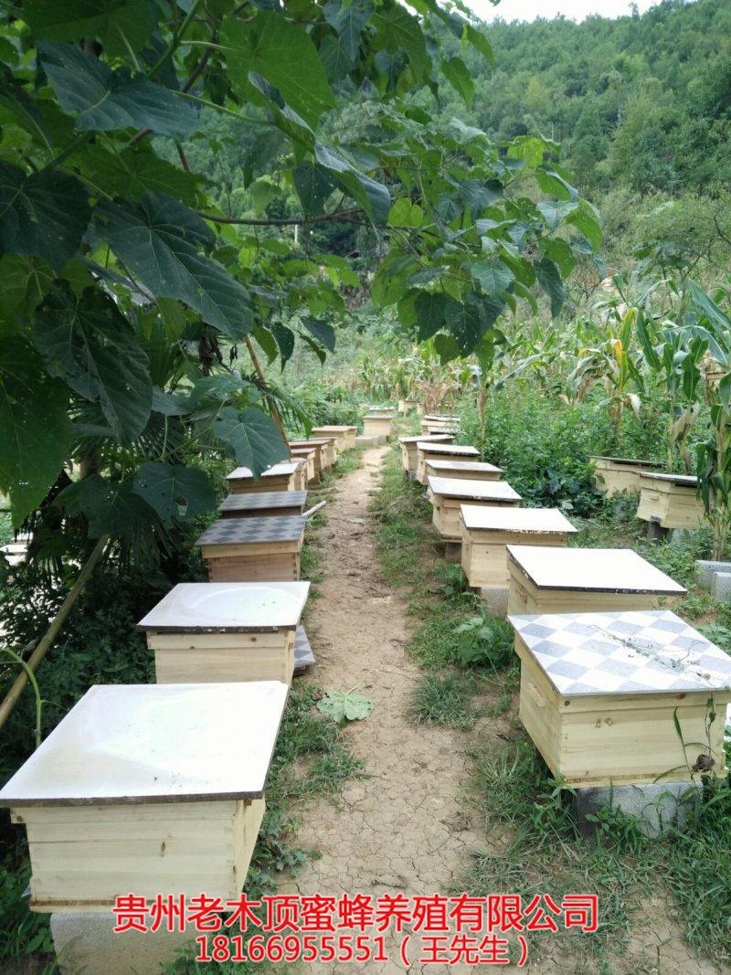 遵义中蜂养殖培训