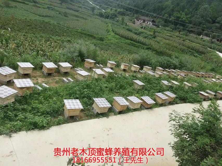 毕节中蜂养殖培训