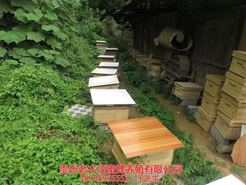 都匀中蜂养殖培训