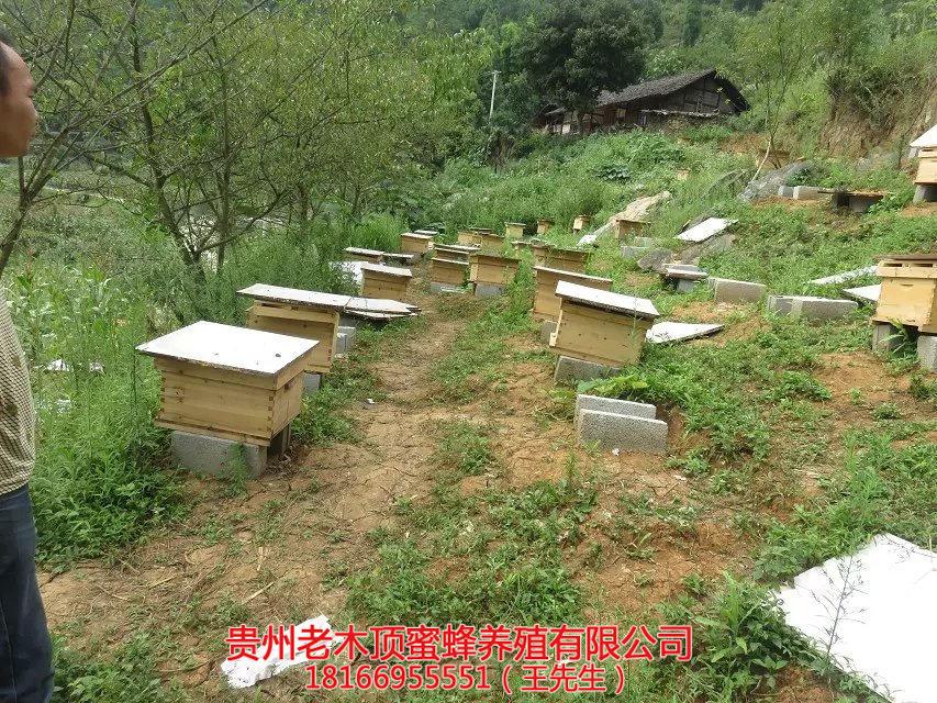 贵州土蜜蜂养殖技术