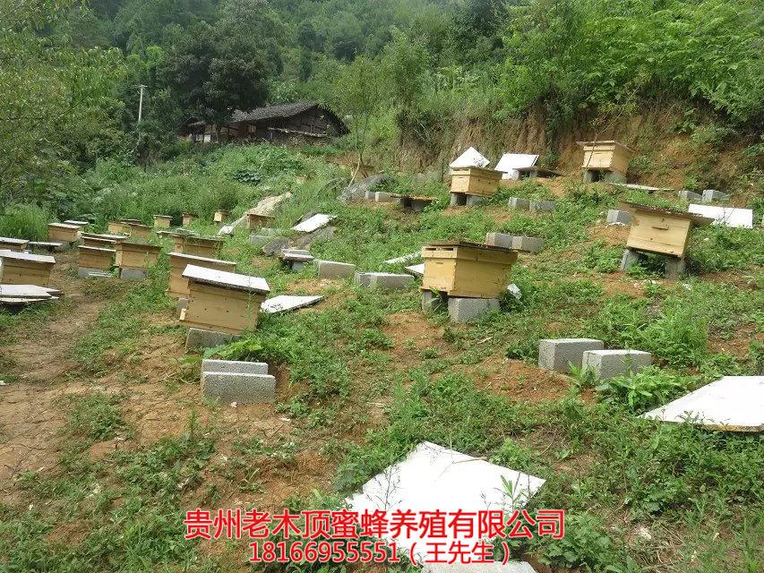 贵阳土蜜蜂养殖技术