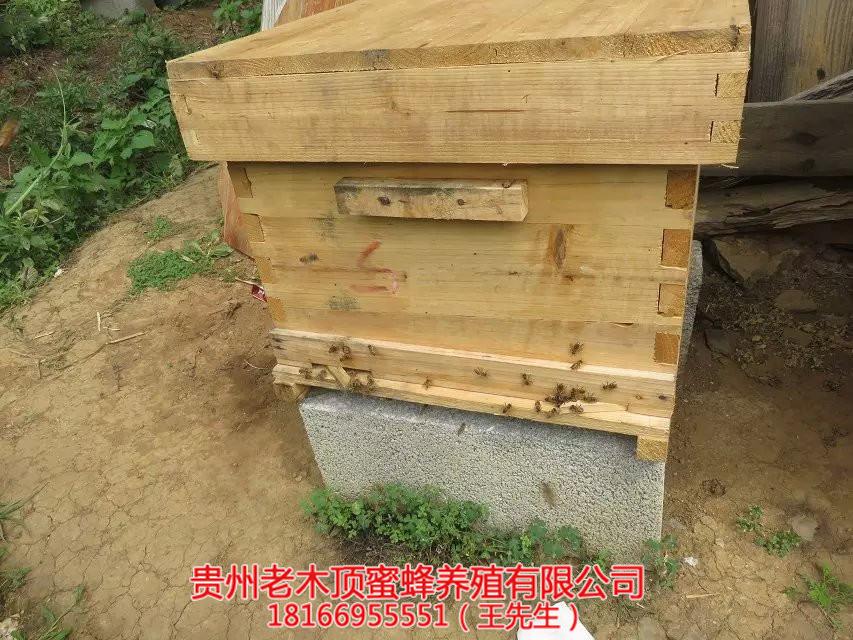貴州蜜蜂養殖]