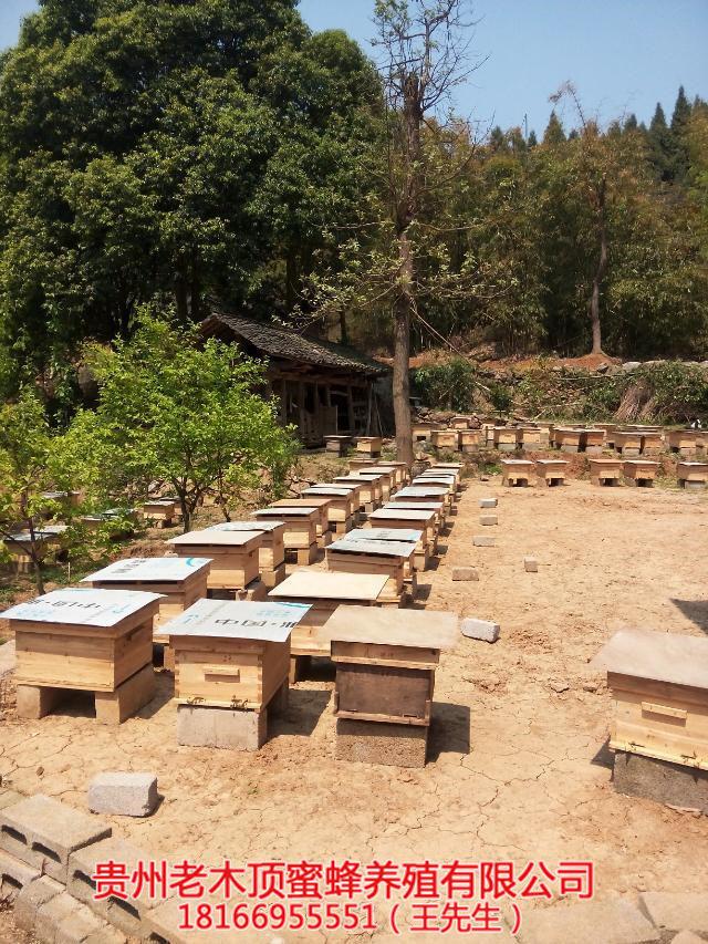 凯里蜜蜂养殖