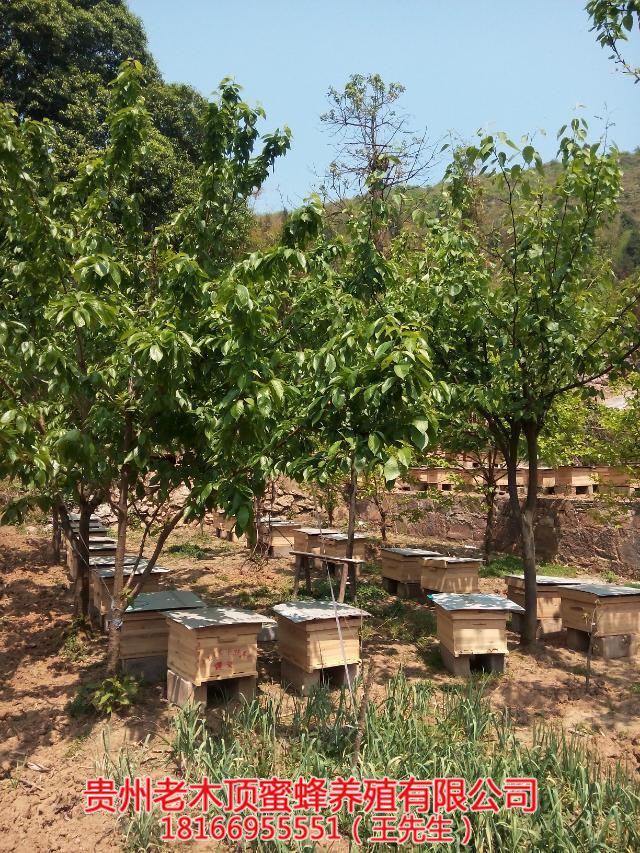 铜仁蜜蜂养殖